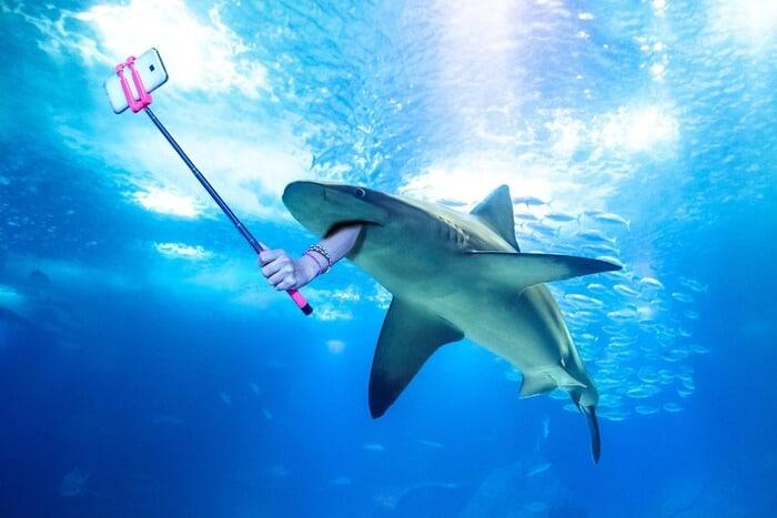 Influenceurs(ses) comment réussir à gagner de l'argent dans ce monde de requins ?
